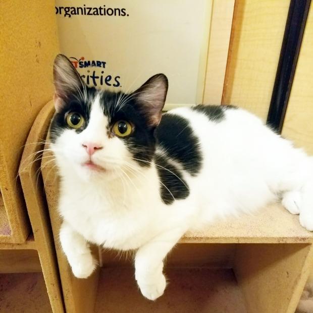 Three Things Thursday: Earnest Kitty | Ms. Emily's Home for Full-Grown Nerds