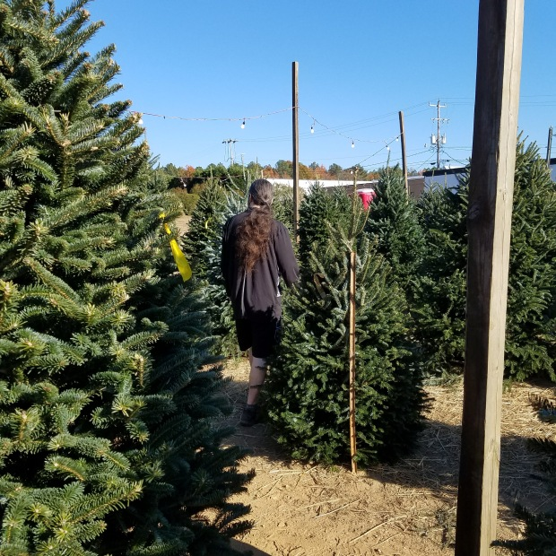 Prowling the Tree Lot | Ms. Emily's Home for Full-Grown Nerds