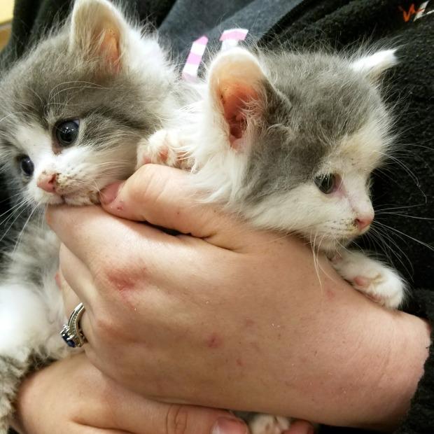 Three Things Thursday: Floofy Kittens | Ms. Emily's Home for Full-Grown Nerds
