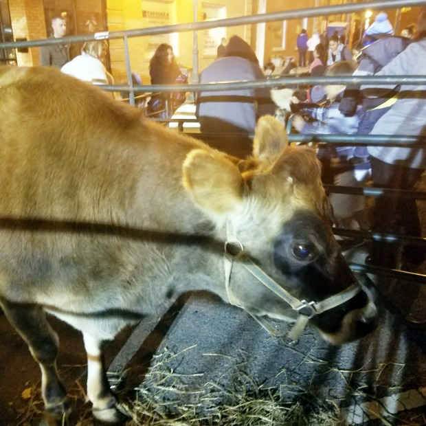 Three Things Thursday: Awesome Cow | Ms. Emily's Home for Full-Grown Nerds
